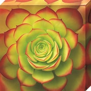 Bungalow Rose 'Fiery Succulent' Gallery Photographic Print on Wrapped Canvas; 20'' H x 20'' W