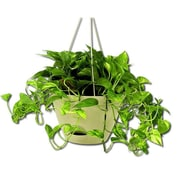 Misco Home and Garden 12.2'' Flare Self-Watering Hanging Planter (Set of 3)