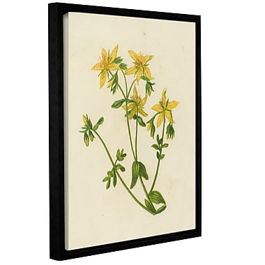 Gracie Oaks 'Perforated St Johns Wort' Framed Graphic Art; 18'' H x 14'' W x 2'' D