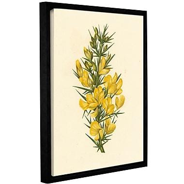 Gracie Oaks 'Furze Ulex Europaeus' Framed Graphic Art; 10'' H x 8'' W x 2'' D