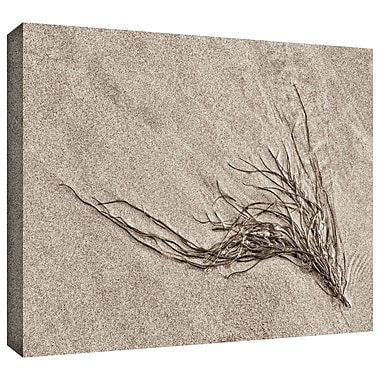 Highland Dunes 'Beach Find I' Graphic Art on Wrapped Canvas; 8'' H 12'' W