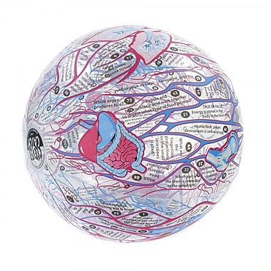 American Educational Products® Clever Catch Ball, Human Anatomy