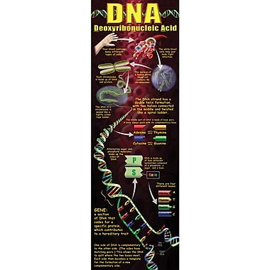 McDonald Publishing® Colossal Poster, DNA Concept