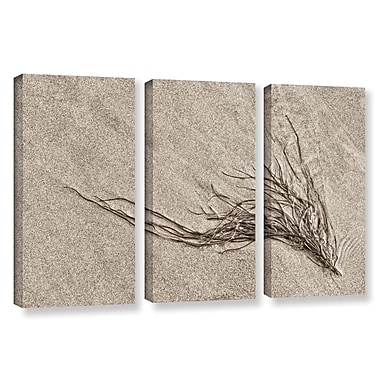 Highland Dunes 'Beach Find I' 3 Piece Graphic Art on Wrapped Canvas Set; 36'' H x 54'' W x 2'' D