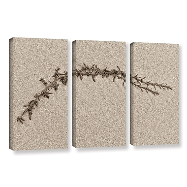 Highland Dunes 'Beach Find II' 3 Piece Graphic Art on Wrapped Canvas Set; 24'' H x 36'' W x 2'' D