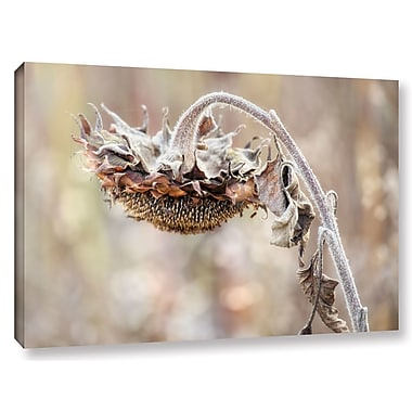 August Grove 'Helianthus' Photographic Print on Wrapped Canvas; 12'' H x 18'' W x 2'' D
