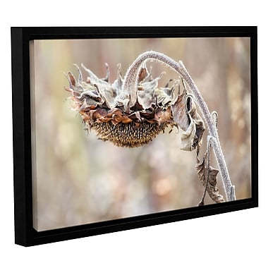 August Grove 'Helianthus' Framed Graphic Art on Wrapped Canvas; 16'' H x 24'' W x 2'' D