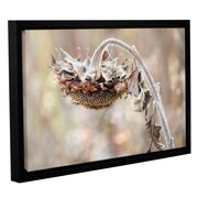 August Grove 'Helianthus' Framed Graphic Art on Wrapped Canvas; 32'' H x 48'' W x 2'' D