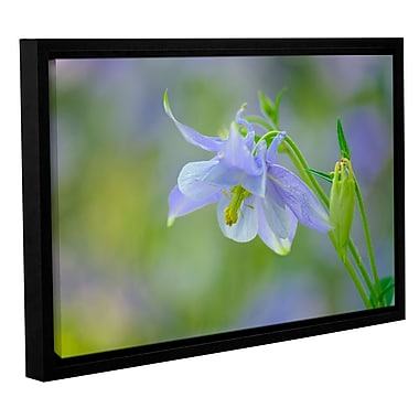 Latitude Run 'Aquilegia Lavender Blue' Framed Photographic Print on Wrapped Canvas