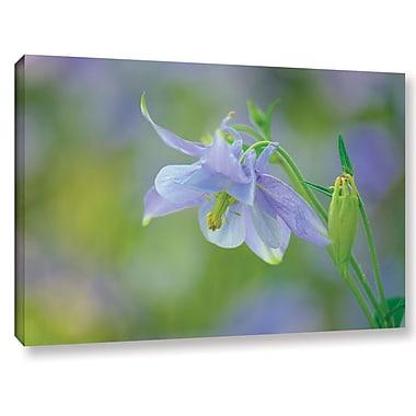 Latitude Run 'Aquilegia Lavender Blue' Photographic Print on Wrapped Canvas; 24'' H x 36'' W x 2'' D