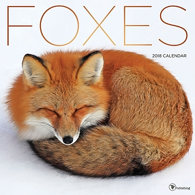 Tf Publishing 2018 Foxes Wall Calendar 12