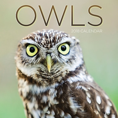 Tf Publishing 2018 Owls Wall Calendar 12