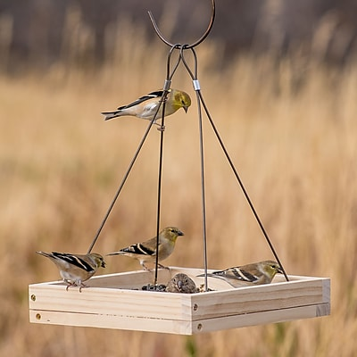 Perky Pet Hanging Tray Bird Feeder (WYF078281905619) photo