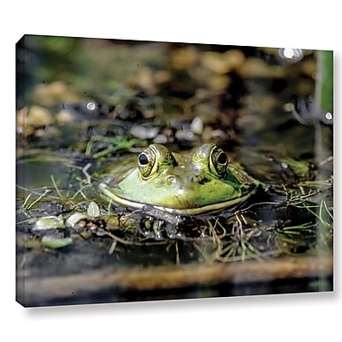 Latitude Run 'Frog' Rectangle Photographic Print on Wrapped Canvas; 14'' H x 18'' W x 2'' D