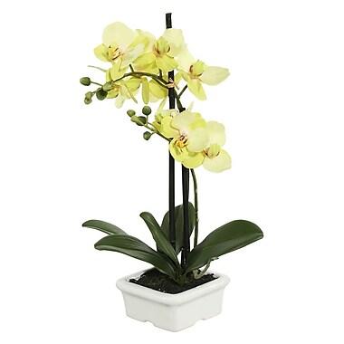 Bloomsbury Market Artificial Orchid Flowers in Pot