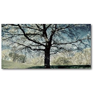 Red Barrel Studio 'Stately Tree' Graphic Art Print on Wrapped Canvas