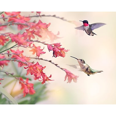 Brewster Home Fashions Humming Birds 8' x 118'' 6 Piece Wall Mural Set