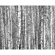 Brewster Home Fashions Wood for the Trees 8' x 118'' 6 Piece Wall Mural Set