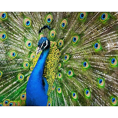 Brewster Home Fashions Peacock 8' x 118'' 6 Piece Wall Mural Set