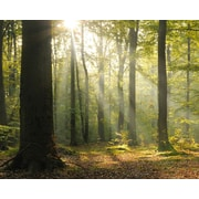 Brewster Home Fashions Tranquil Forest 8' x 118'' 6 Piece Wall Mural Set
