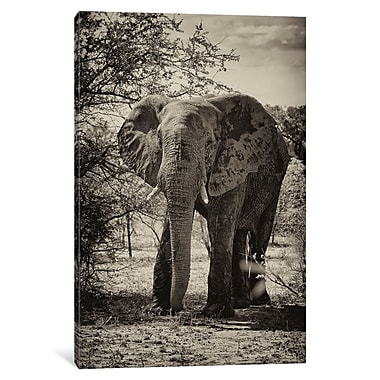 East Urban Home 'Awesome South Africa Series' Vertical Photographic Print on Wrapped Canvas