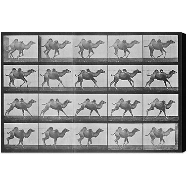 Bloomsbury Market 'Camels in Motion' Photographic Print on Wrapped Canvas; 30'' H x 45'' W