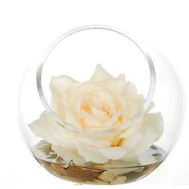 Winston Porter Rose Floral Arrangement in Pot; White