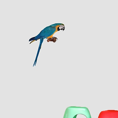 SweetumsWallDecals Real Life Parrot Wall Decal; 18'' H x 15'' W