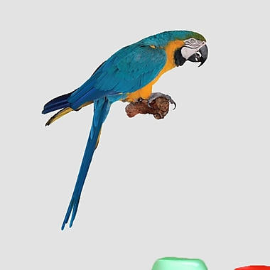 SweetumsWallDecals Real Life Parrot Wall Decal; 36'' H x 30'' W