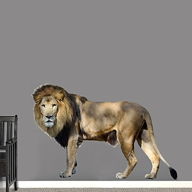 SweetumsWallDecals Real Life Lion Wall Decal; 40'' H x 60'' W