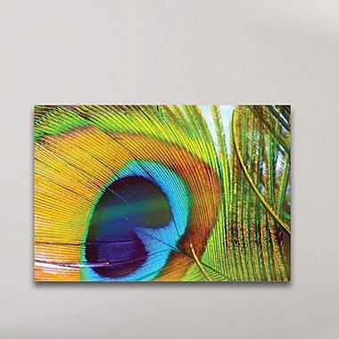 Bloomsbury Market 'Peacock Colors' Photographic Print; Metal