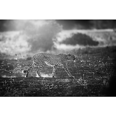 East Urban Home 'Backlit Cheetah' Photographic Print on Wrapped Canvas in Black/White
