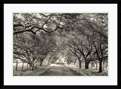 Alcott Hill 'Canopy' Framed Photographic Print on Wood