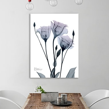 Ebern Designs 'Midnight Gentian I' Graphic Art Print on Wrapped Canvas; 24'' H x 24'' W
