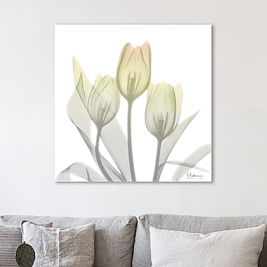 Latitude Run 'Sunday Morning Tulips Two' Graphic Art Print on Wrapped Canvas; 48'' H x 48'' W