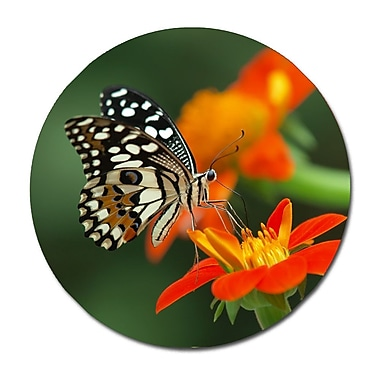Serge De Troyer Collection 'Beautiful Butterfly' Photographic Print on Glass; 46'' H x 46'' W