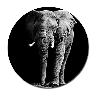 Serge De Troyer Collection 'Elephant Frontal' Photographic Print on Glass; 24'' H x 24'' W
