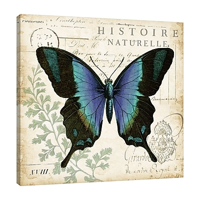August Grove 'Butterfly Histoire Naturelle II' Graphic Art Print on Wrapped Canvas; 18'' H x 18'' W