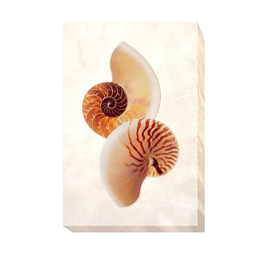 Highland Dunes 'Nautilus' Oil Painting Print on Wrapped Canvas; 24 in. H x 16 in. W
