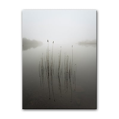 Highland Dunes 'Reeds in the Mist' Photographic Print on Canvas; 40'' H x 30'' W