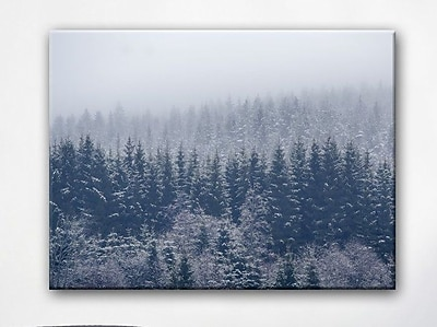 Loon Peak 'Frozen Trees' Photographic Print on Canvas; 16'' H x 20'' W