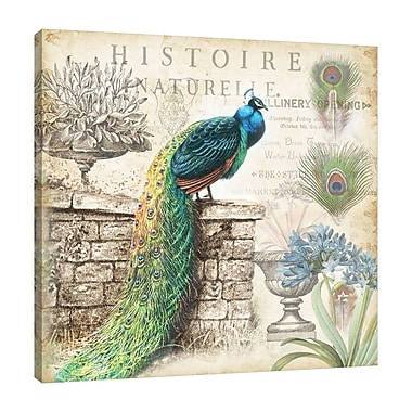 Ophelia & Co. 'Vintage Peacock II' Graphic Art Print on Wrapped Canvas; 18'' H x 18'' W