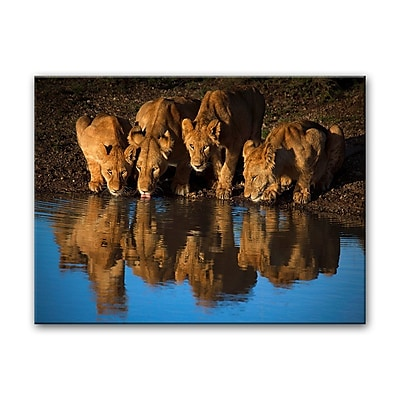 Bloomsbury Market 'Lions of Mara' Photographic Print on Canvas; 16'' H x 20'' W