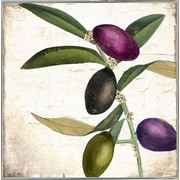 Charlton Home 'Olive Branch II' Graphic Art Print; Metal Silver Framed