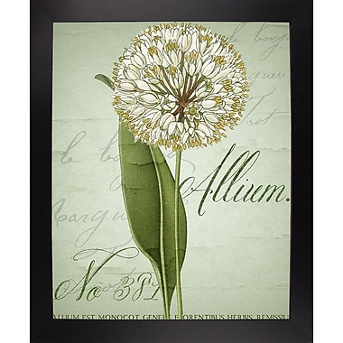 Ophelia & Co. 'Allium II' Graphic Art Print; Black Large Framed