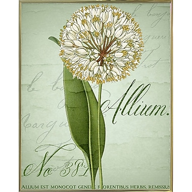 Ophelia & Co. 'Allium II' Graphic Art Print; Metal Gold Framed