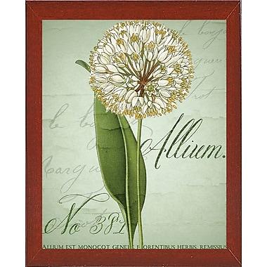Ophelia & Co. 'Allium II' Graphic Art Print; Red Mahogany Medium Framed