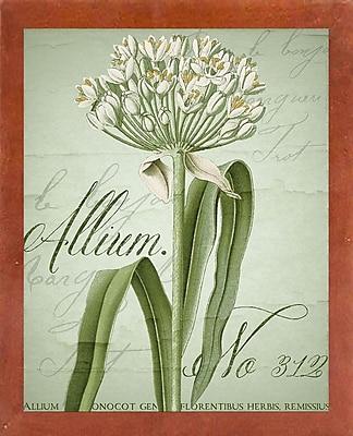 Ophelia & Co. 'Allium I' Graphic Art Print; Canadian Walnut Medium Framed