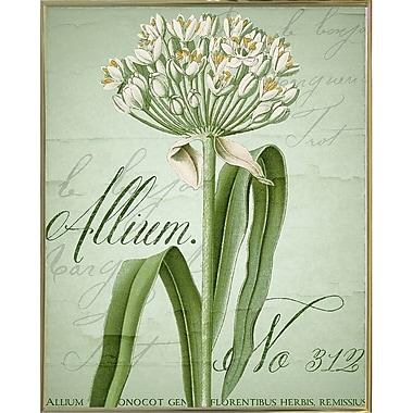Ophelia & Co. 'Allium I' Graphic Art Print; Metal Gold Framed