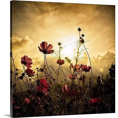 Latitude Run 'Watching the Sun' Photographic Print on Canvas; 35'' H x 35'' W x 1.5'' D